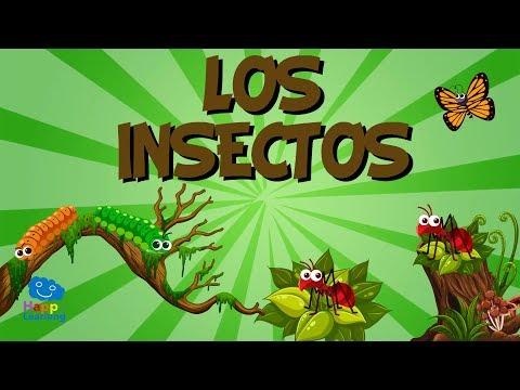 LOS INSECTOS | Vídeos Educativos para Niños