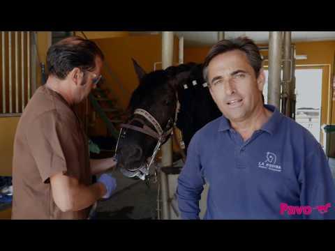 El cuidado de la boca del caballo: picos y puntas en los dientes