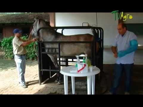 Tecnología de reproducción de Equinos - Juan Gonzalo Angel TvAgro