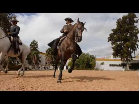 'Cómo bailan los caballos andaluces'