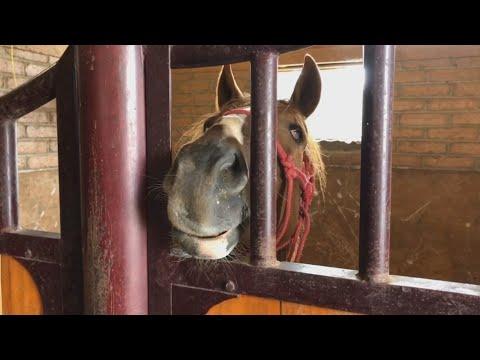 Cuacolandia, el refugio mexicano para caballos maltratados