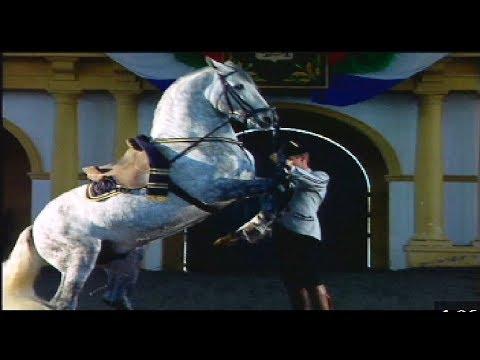 Real Escuela Andaluza de Arte Ecuestre: caballos de raza