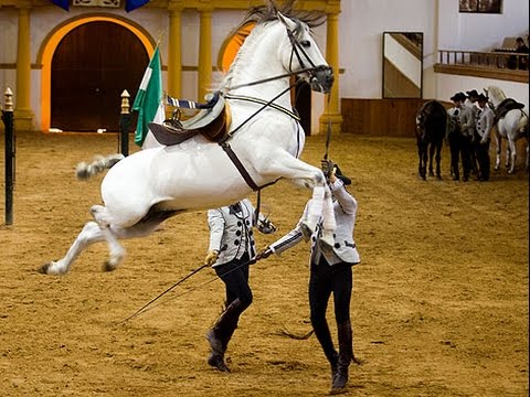 Caballos Andaluces