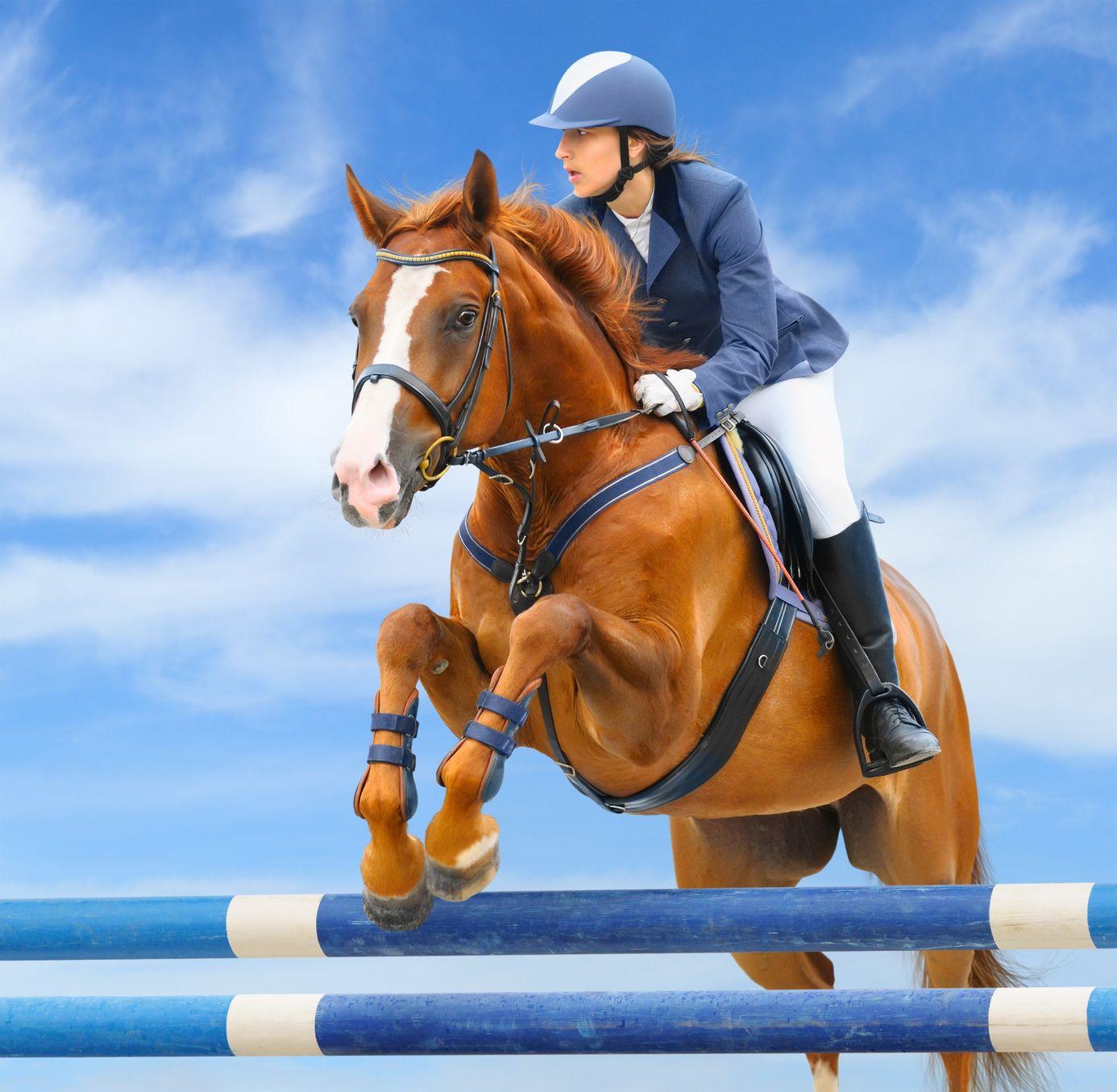 Equitación: El arte de cabalgar con técnica y destreza