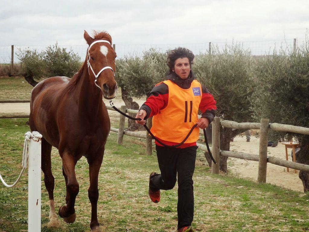 El entrenamiento del caballo