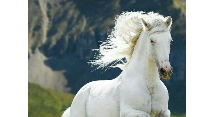 El caballo un animal digno de Admirar