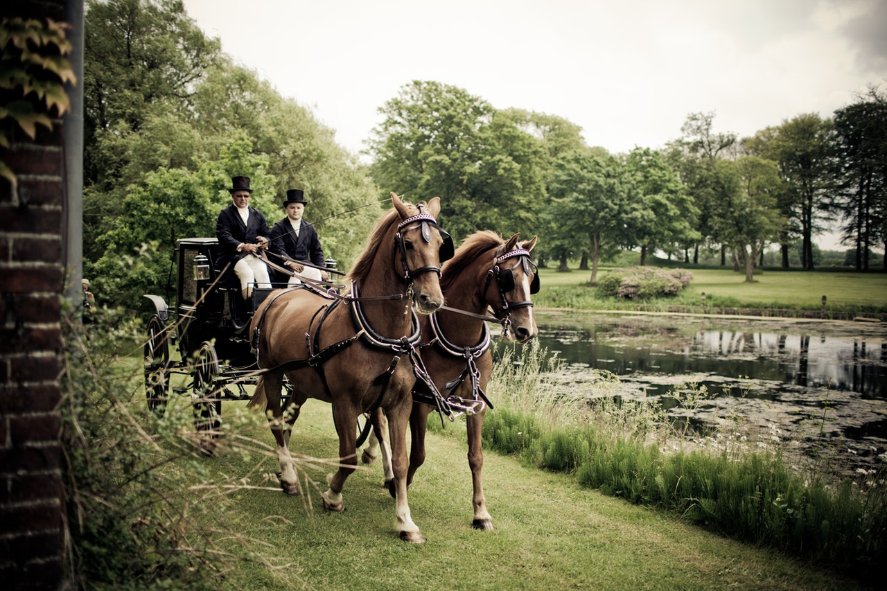 Historia breve del caballo (parte 1)