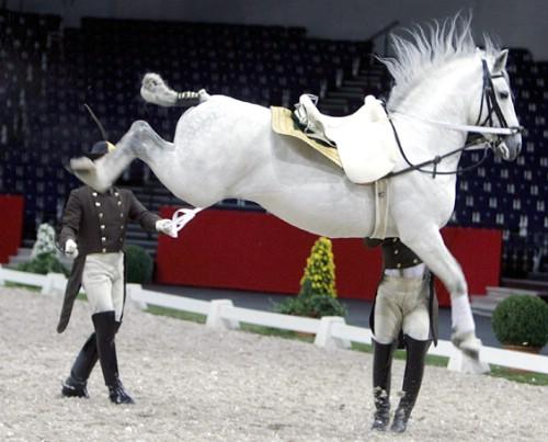 Alta Escuela: Disciplina de la Equitación