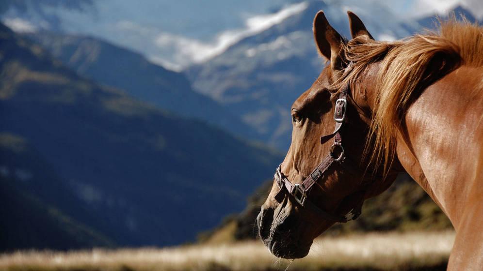 Biología y comportamiento del caballo