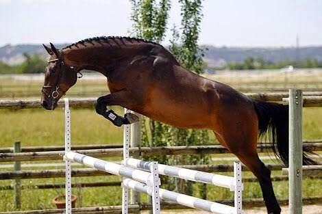Mirabal y los caballos de salto