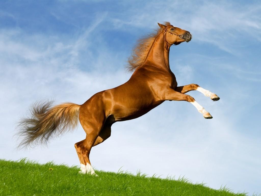 El caballo en la literatura