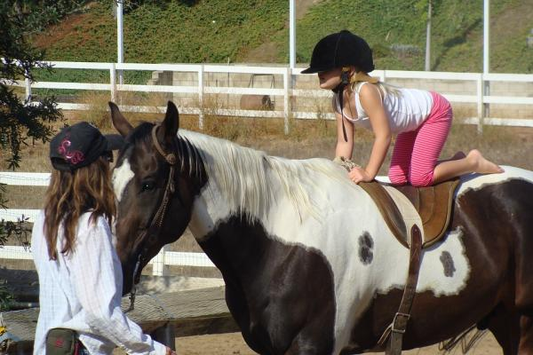 Fisioterapia con Equinos