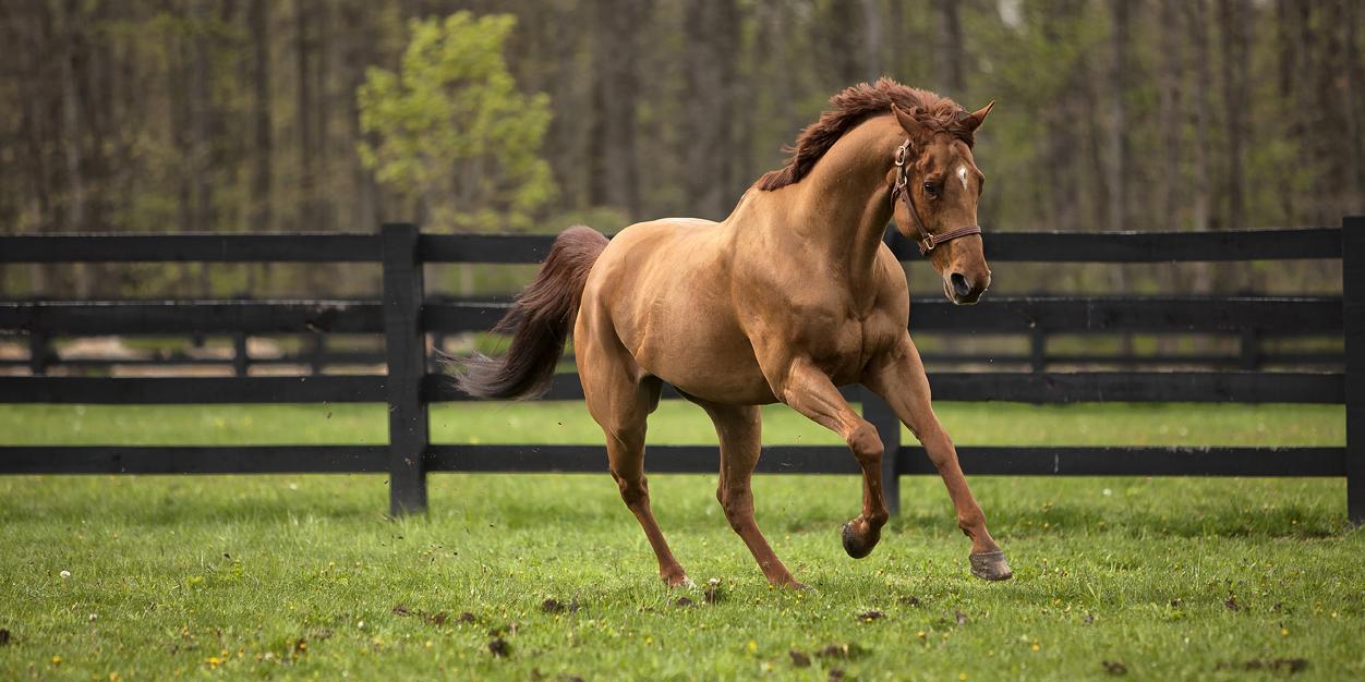 El caballo y Gustavo Mirabal
