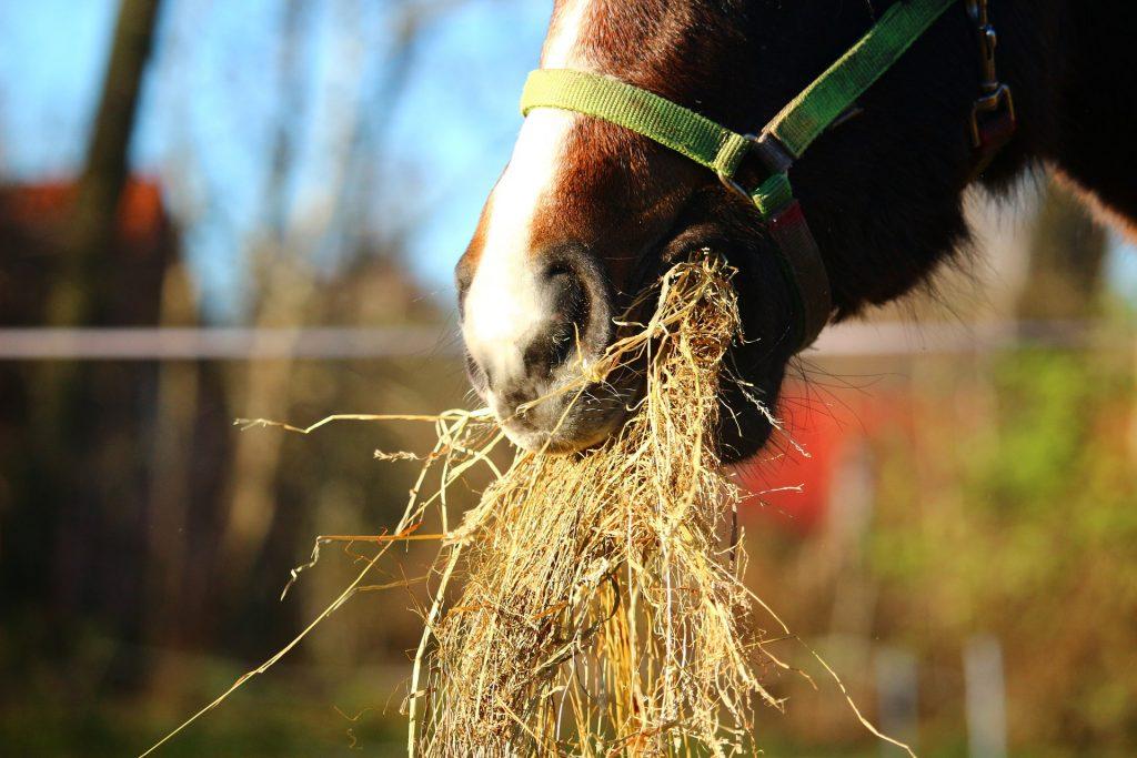 El forraje para la dieta del caballo - Gustavo Mirabal