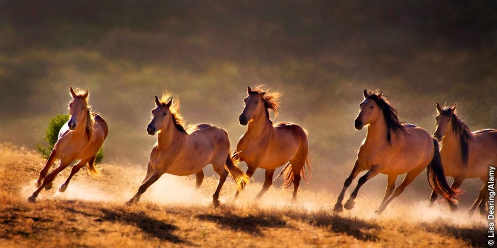 El caballo para Gustavo Mirabal