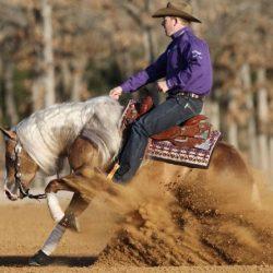 Reining competición western