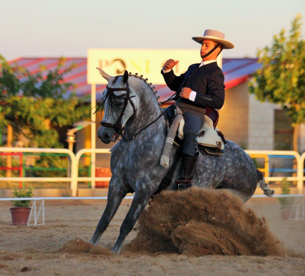 modalidades de la Equitación: doma vaquera