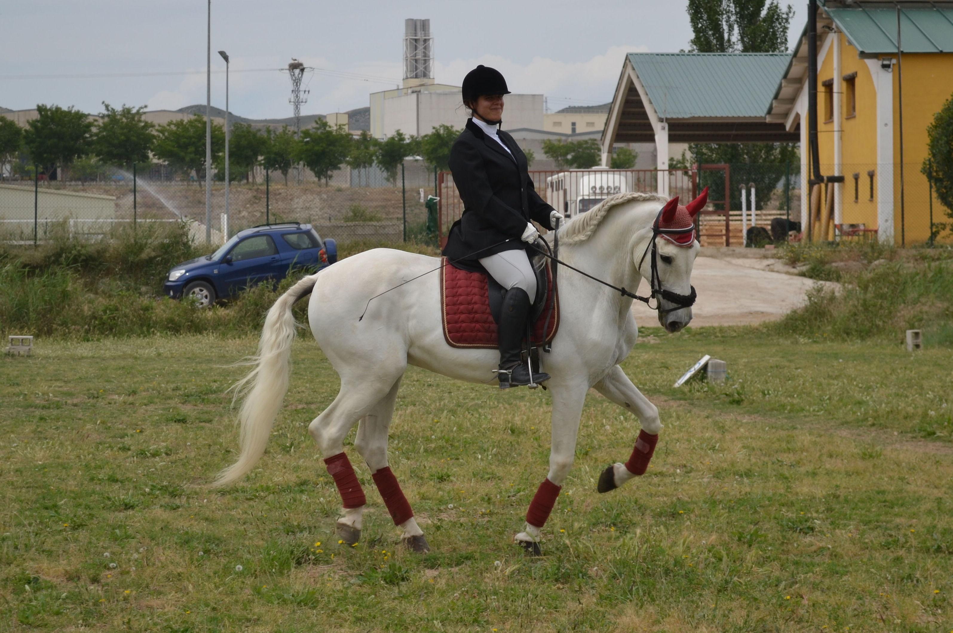 equitación Alexander