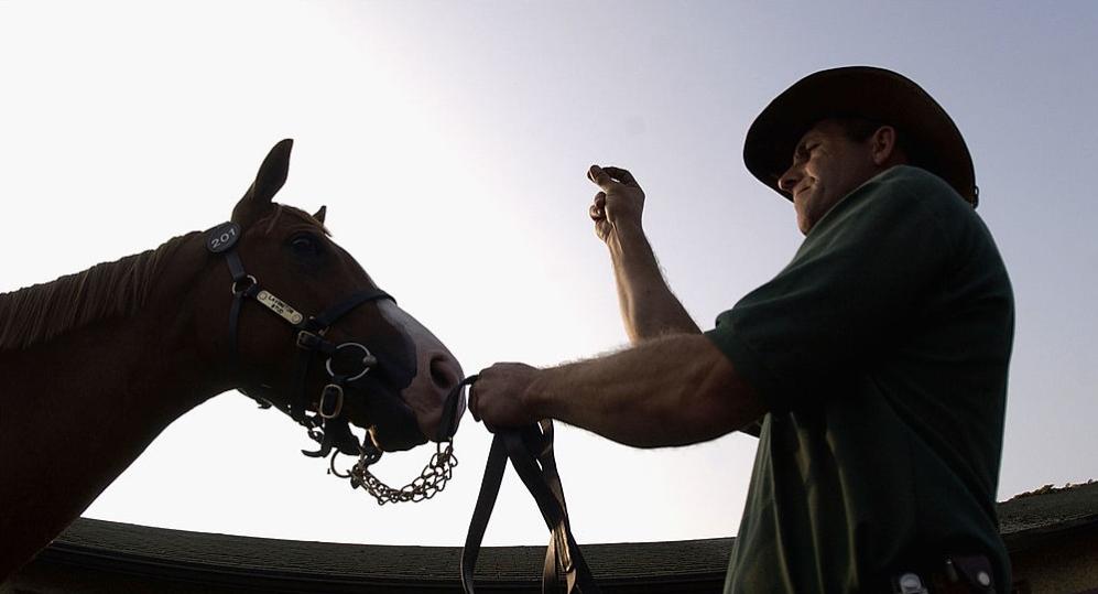 Comunicación del caballo con el hombre