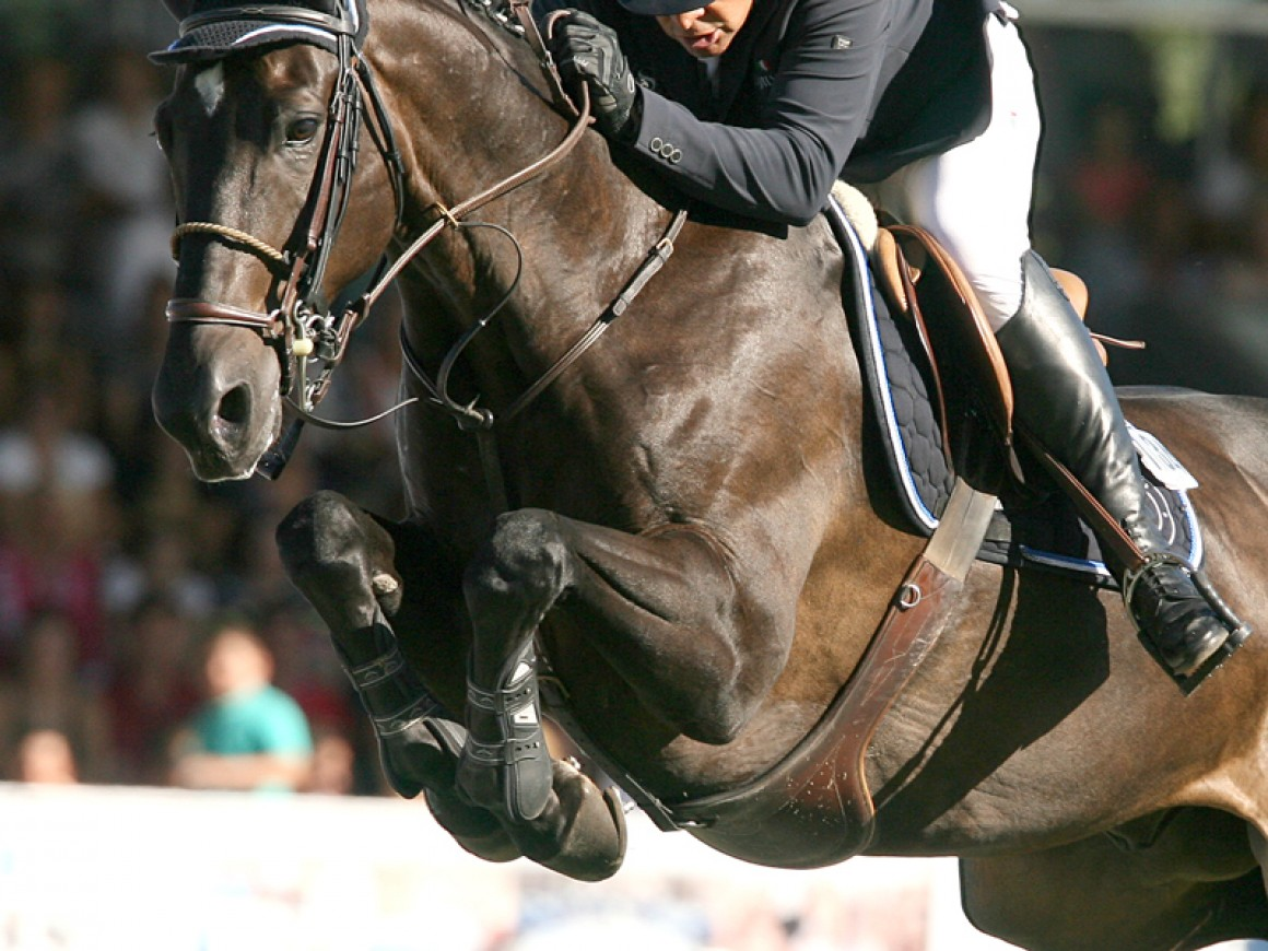 Jinete: el amigo del caballo