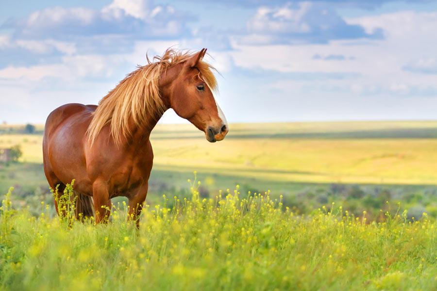 ¿Conoces el peso de su caballo?