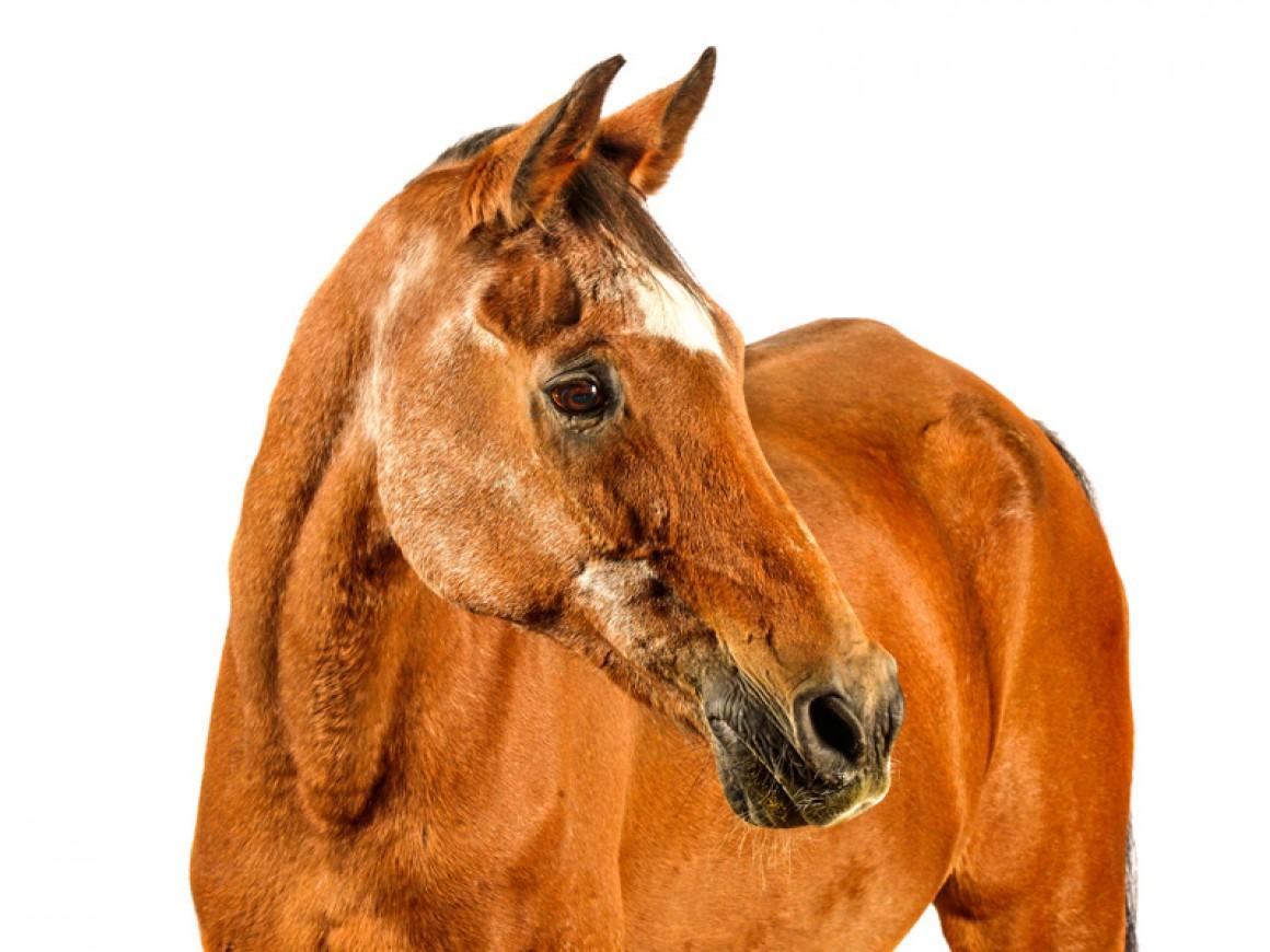 Precauciones en el manejo de caballos