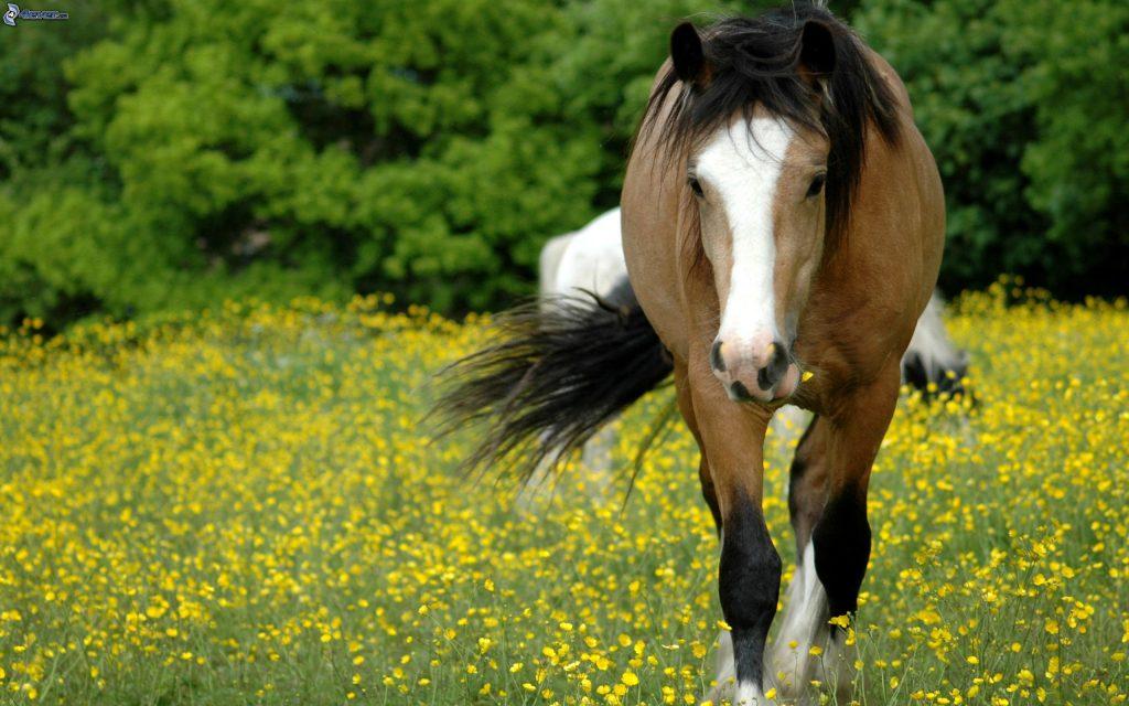 Pastos y forrajes para caballos