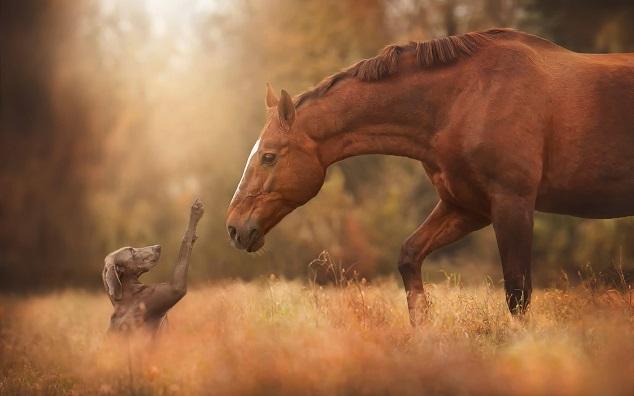 caballos-perros 4