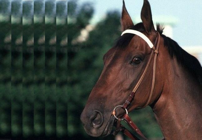 caballo jhon henry