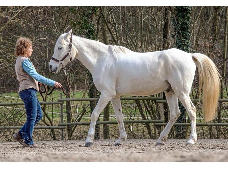 Flexibilidad del caballo