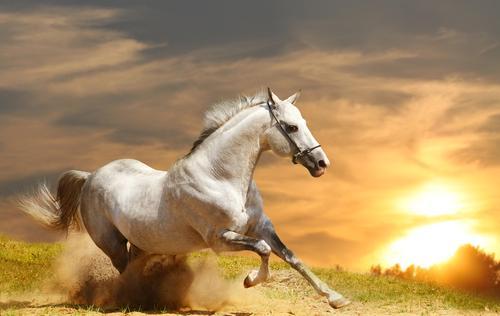 Omega-3 importante para los caballos