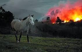 Caballo en un incendio