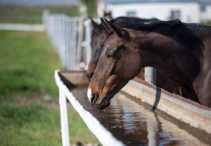 Hidratación en los caballos