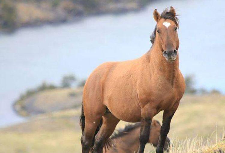 caballos cimarrones