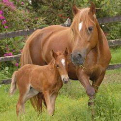 cría y reproducción