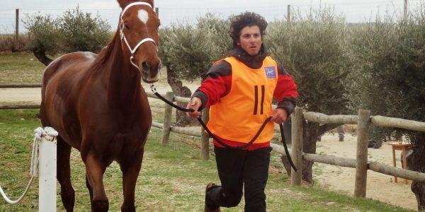 entrenando al caballo