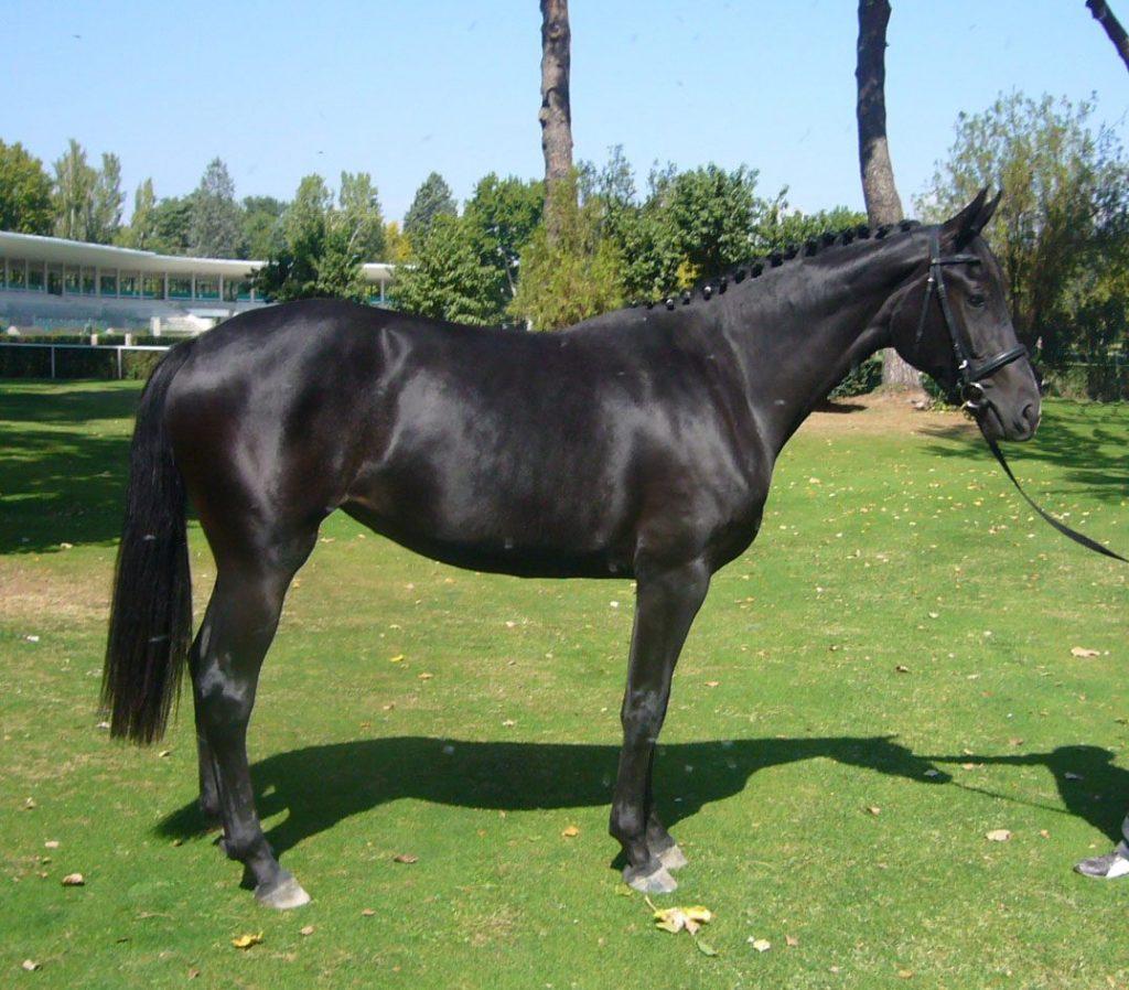gustavo mirabal y el caballo