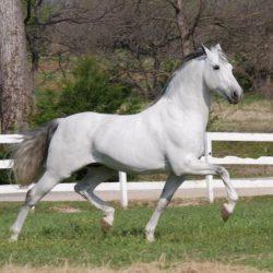 Trote del caballo