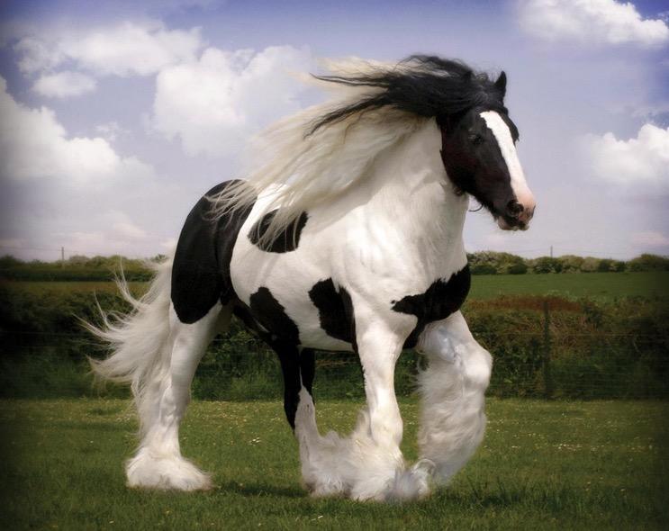 caballo Shire