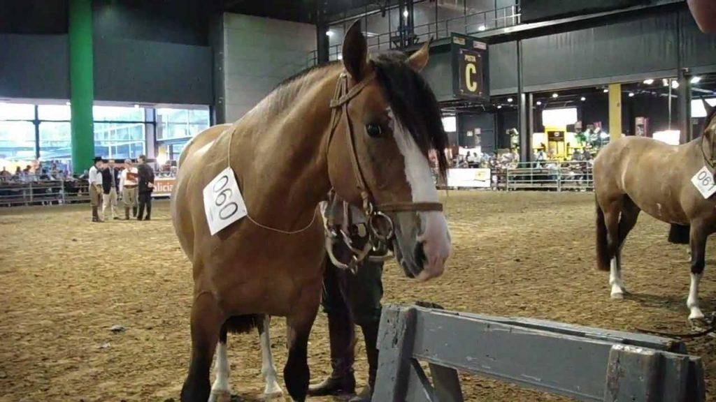 el caballo en Argentina