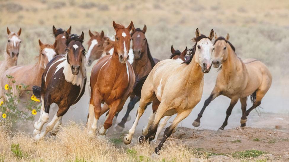 el estrés en los caballos