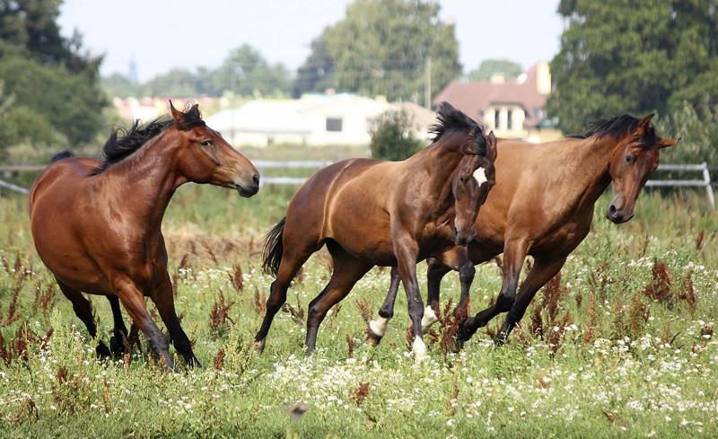 Limpieza del caballo