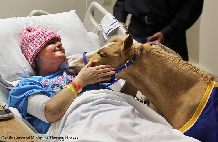 Los caballos miniaturas de terapia en hospitales