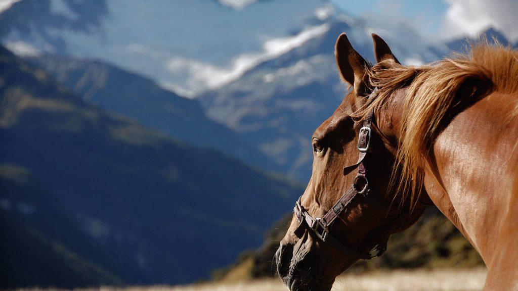 el caballo en la filosofía