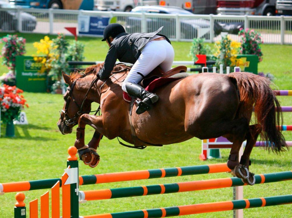 el caballo y el deporte