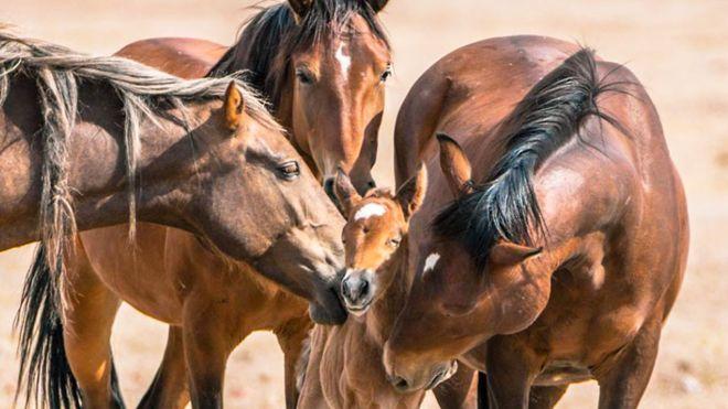 Importancia de la estimulación en los caballos