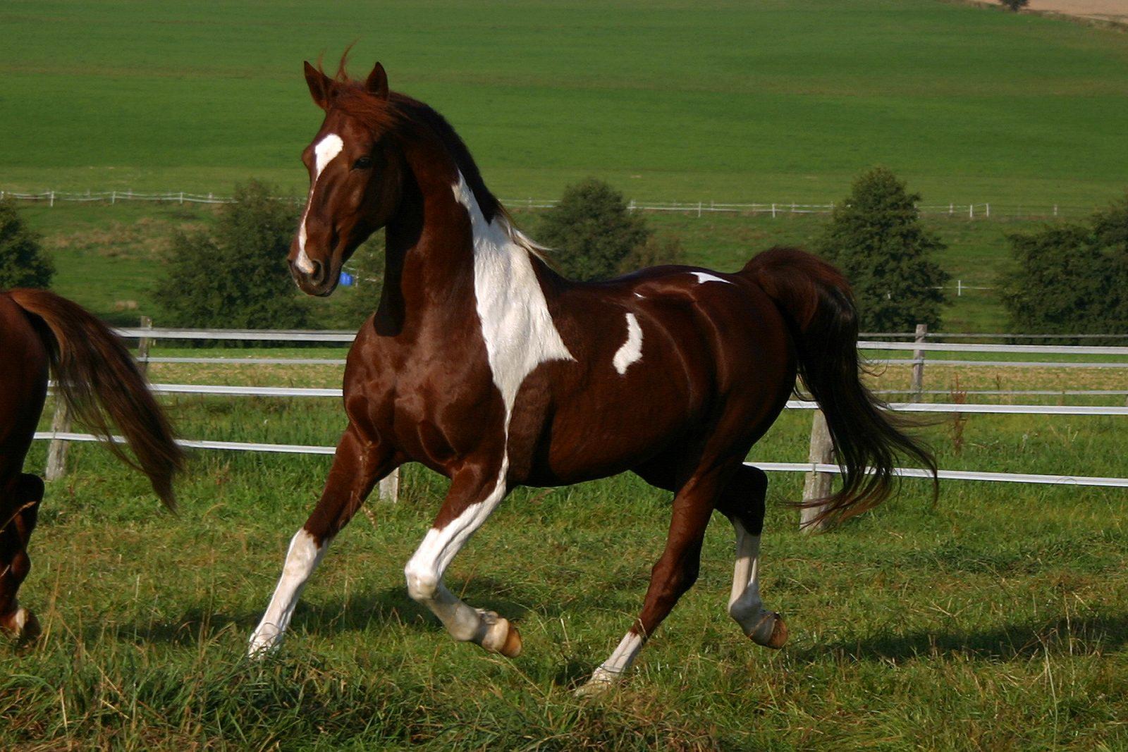 Lesiones tras caídas de caballo