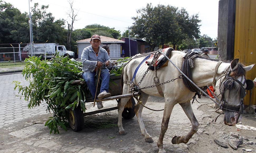 Maltrato y sobrecarga del caballo