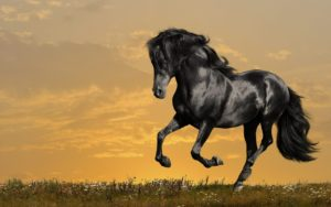 Magnficencia del caballo