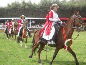 Jinetes caballos